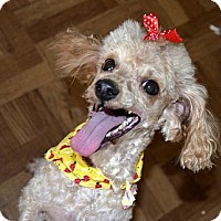 Adopt A Pet :: Mari - Xenia, OH
