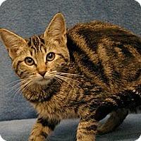 Adopt A Pet :: Zephey - Sacramento, CA
