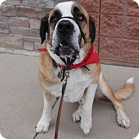 Adopt A Pet :: Duke - Denver, CO