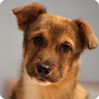 Adopt A Pet :: Farah - Romeoville, IL