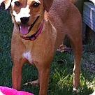 Adopt A Pet :: Mollie