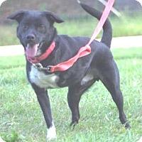 Adopt A Pet :: 42306  Finn - Wetumpka, AL