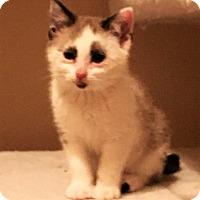 Adopt A Pet :: Panda - Davenport, IA