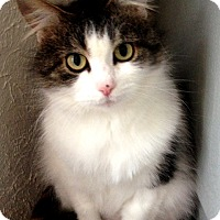 Adopt A Pet :: Elena - Mississauga, Ontario, ON