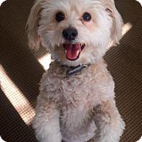 Adopt A Pet :: Music - Los Angeles, CA