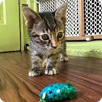 Adopt A Pet :: Azalea - Chicago, IL