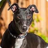 Adopt A Pet :: Elsey - Walnut Creek, CA