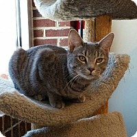 Adopt A Pet :: Gretchen - Maryville, TN