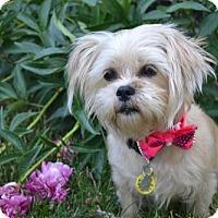 Adopt A Pet :: Kiki 3366 - Toronto, ON