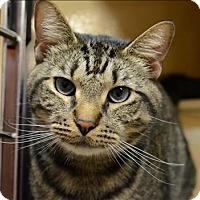 Adopt A Pet :: Peugeot - Sherwood, OR