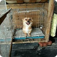 Adopt A Pet :: Yeri - Fairfax, VA