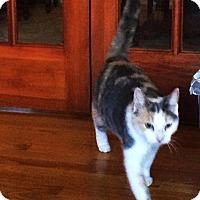 Adopt A Pet :: Bailey - brewerton, NY