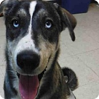 Adopt A Pet :: BONNIE - Ukiah, CA
