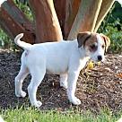 Adopt A Pet :: Anna's Nala