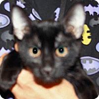 Adopt A Pet :: Dale - Wildomar, CA