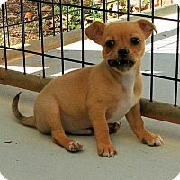 Adopt A Pet :: Gummy Bear - Barnesville, GA