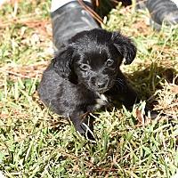 Adopt A Pet :: Blake - Groton, MA