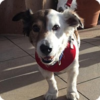 Adopt A Pet :: Murphy - Dana Point, CA