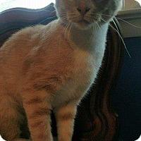 Adopt A Pet :: SAMUEL - Hampton, VA