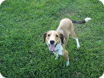 Collie Mix Dog for adoption in Tampa, Florida - Margo