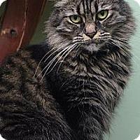 Adopt A Pet :: Truffle - Auburn, CA