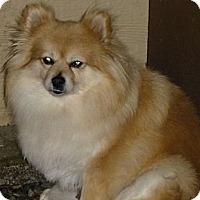 Adopt A Pet :: Suzie - Gig Harbor, WA