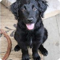 Adopt A Pet :: Colin - Denver, CO