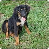 Adopt A Pet :: Dan - Orlando, FL