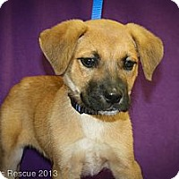 Adopt A Pet :: Beaker - Broomfield, CO