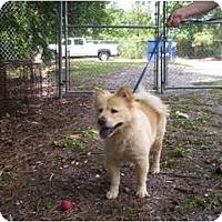 Adopt A Pet :: Sunny - Chesapeake, VA