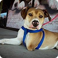 Adopt A Pet :: Max - Fresno, CA