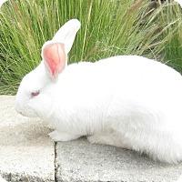 Adopt A Pet :: Petunia - Bonita, CA