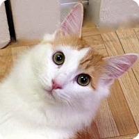 Adopt A Pet :: Blaze - Tiburon, CA