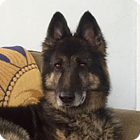 Adopt A Pet :: Vanessa - Ocean Ridge, FL