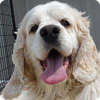 Adopt A Pet :: Hercules - MINNEAPOLIS, KS