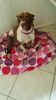Pit Bull Terrier Dog for adoption in Crestview, Florida - Kharma