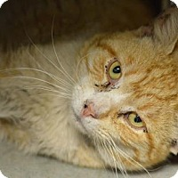Adopt A Pet :: Zeekie (foster care) - Philadelphia, PA