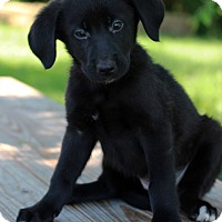 Adopt A Pet :: Leyla - Waldorf, MD