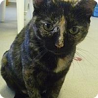Adopt A Pet :: Addie - Hamburg, NY
