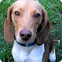 Adopt A Pet :: Tyler - Houston, TX