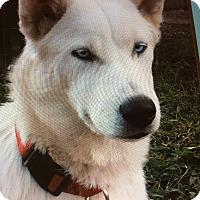 Adopt A Pet :: PAPI VON PAPPENHEIM - Los Angeles, CA
