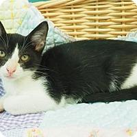 Adopt A Pet :: Harold - New Orleans, LA