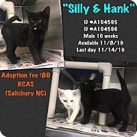 Domestic Shorthair Kitten for adoption in Salisbury, North Carolina - Silly & Hank
