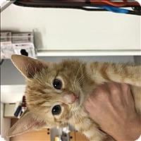 Adopt A Pet :: Kris - Madison, NJ