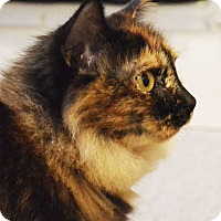 Adopt A Pet :: Prim - Lincoln, NE