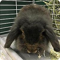 Adopt A Pet :: Dumbo - Madison, NJ