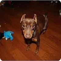 Adopt A Pet :: Tonka - Summerville, SC