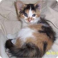 Adopt A Pet :: Aeribella - Saint Albans, WV