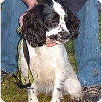 Adopt A Pet :: Mia - Tacoma, WA