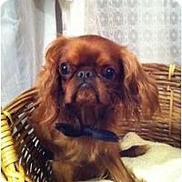 Adopt A Pet :: Oliver - Cumberland, MD